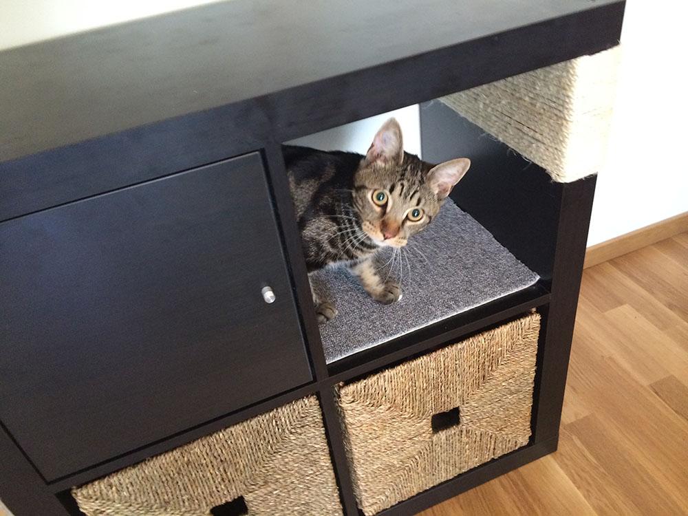 Reciclar muebles para perros y gatos recicla tus muebles - Estanterias para gatos ...