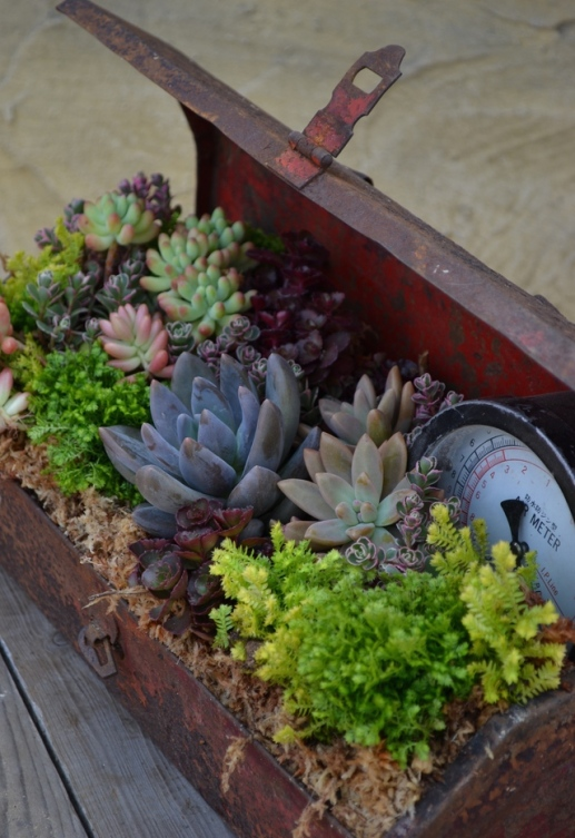 easy-container-gardening-1
